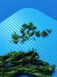 5 picar cilantro