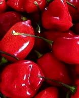 savina rojo