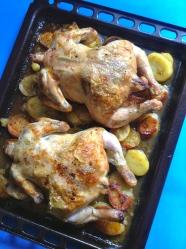 15 colocar pollos